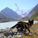 Котенок на озере