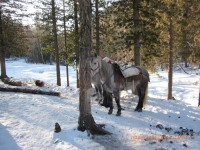 кони, Озёк орё