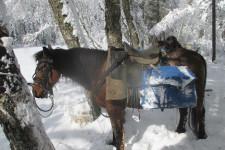 Мой конь - Лунтик