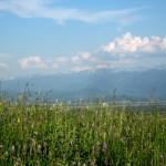 Цветущая долина