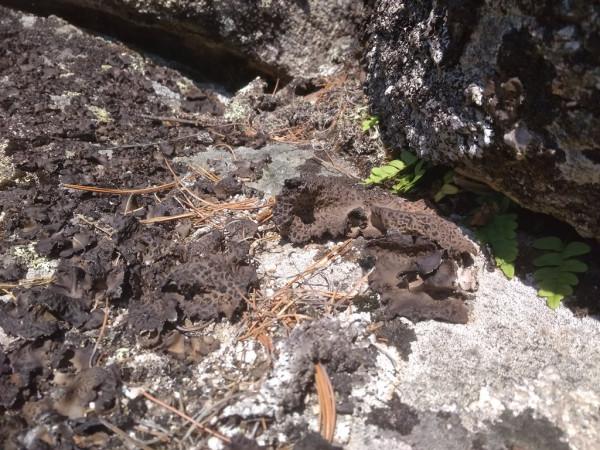 Голый камень-мхи и лишайники