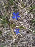 Цветы Бугузуна