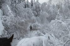 Дорога на Кучерлинское
